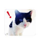 猫のビックリちゃん(個別スタンプ:01)