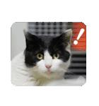 猫のビックリちゃん(個別スタンプ:02)