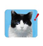 猫のビックリちゃん(個別スタンプ:03)