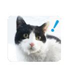猫のビックリちゃん(個別スタンプ:04)