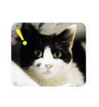 猫のビックリちゃん(個別スタンプ:05)