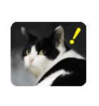 猫のビックリちゃん(個別スタンプ:06)