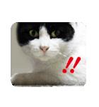 猫のビックリちゃん(個別スタンプ:07)