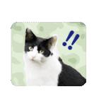 猫のビックリちゃん(個別スタンプ:08)