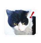 猫のビックリちゃん(個別スタンプ:09)