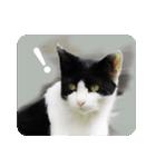 猫のビックリちゃん(個別スタンプ:10)