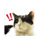猫のビックリちゃん(個別スタンプ:11)