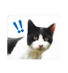 猫のビックリちゃん(個別スタンプ:12)