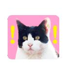 猫のビックリちゃん(個別スタンプ:13)