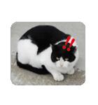 猫のビックリちゃん(個別スタンプ:14)