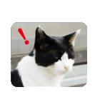 猫のビックリちゃん(個別スタンプ:15)