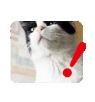 猫のビックリちゃん(個別スタンプ:16)