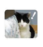 猫のビックリちゃん(個別スタンプ:17)