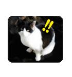猫のビックリちゃん(個別スタンプ:18)