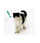 猫のビックリちゃん(個別スタンプ:19)