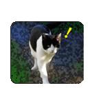 猫のビックリちゃん(個別スタンプ:20)