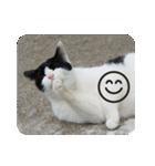 猫のビックリちゃん(個別スタンプ:21)