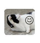 猫のビックリちゃん(個別スタンプ:22)
