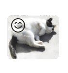 猫のビックリちゃん(個別スタンプ:23)