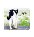 猫のビックリちゃん(個別スタンプ:24)