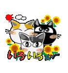 猫ざんまい(個別スタンプ:01)