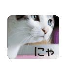 猫のトラッシュちゃん(個別スタンプ:01)