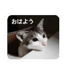 猫のトラッシュちゃん(個別スタンプ:02)