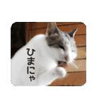 猫のトラッシュちゃん(個別スタンプ:03)