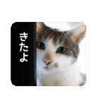 猫のトラッシュちゃん(個別スタンプ:04)