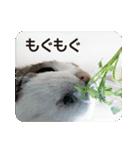 猫のトラッシュちゃん(個別スタンプ:05)