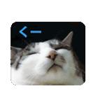 猫のトラッシュちゃん(個別スタンプ:06)