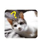 猫のトラッシュちゃん(個別スタンプ:07)