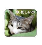 猫のトラッシュちゃん(個別スタンプ:08)