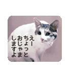 猫のトラッシュちゃん(個別スタンプ:09)
