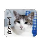 猫のトラッシュちゃん(個別スタンプ:10)