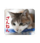 猫のトラッシュちゃん(個別スタンプ:11)