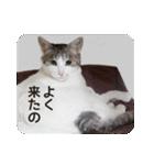 猫のトラッシュちゃん(個別スタンプ:12)