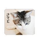 猫のトラッシュちゃん(個別スタンプ:13)