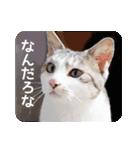 猫のトラッシュちゃん(個別スタンプ:14)