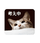 猫のトラッシュちゃん(個別スタンプ:15)