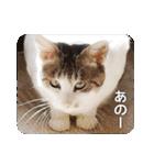猫のトラッシュちゃん(個別スタンプ:16)