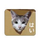 猫のトラッシュちゃん(個別スタンプ:17)
