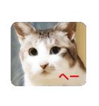 猫のトラッシュちゃん(個別スタンプ:18)