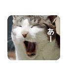 猫のトラッシュちゃん(個別スタンプ:19)