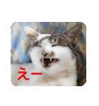 猫のトラッシュちゃん(個別スタンプ:20)