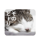 猫のトラッシュちゃん(個別スタンプ:21)