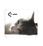 猫のトラッシュちゃん(個別スタンプ:22)