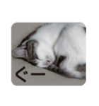 猫のトラッシュちゃん(個別スタンプ:23)