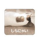 猫のトラッシュちゃん(個別スタンプ:24)