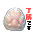 愛犬マロンの肉球【写真】(個別スタンプ:1)
